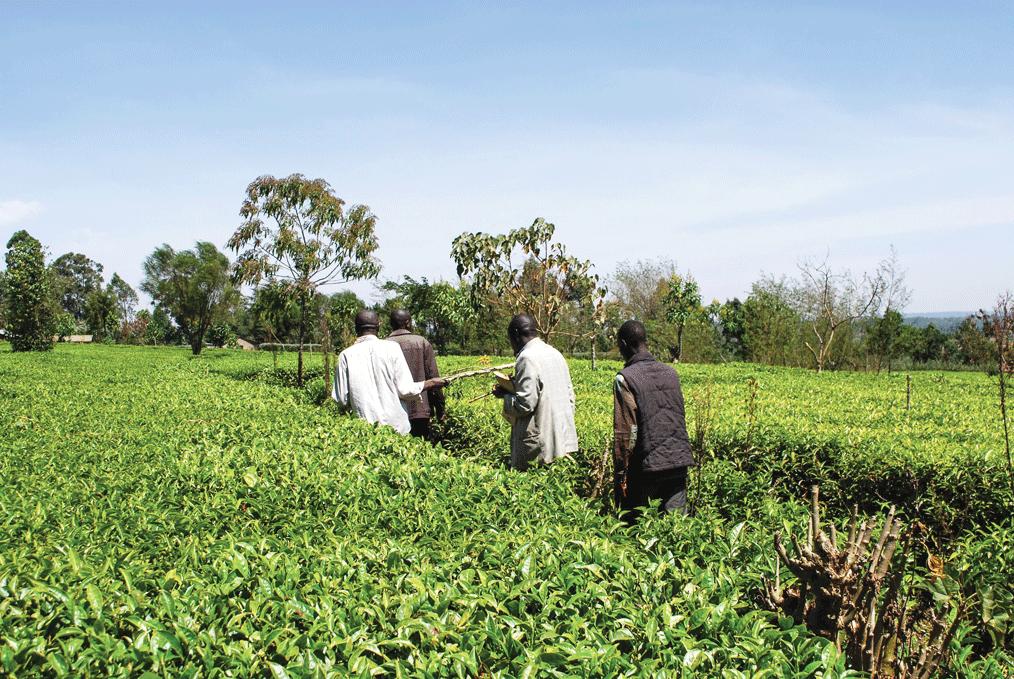 farmers-in-kenya_WeFarm